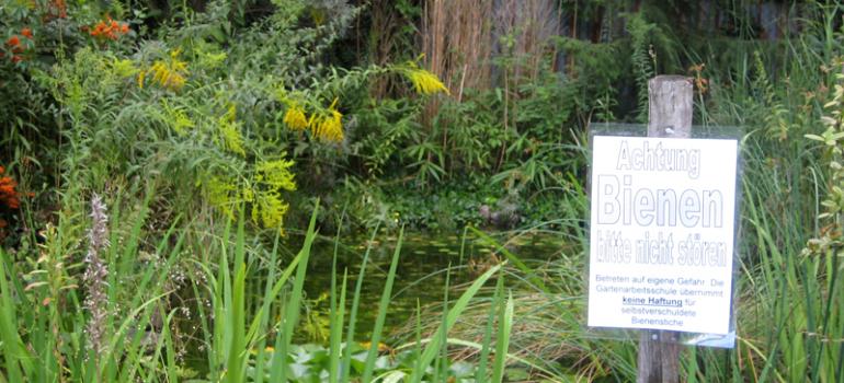 Teich und Bienenstand