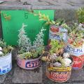 Der grüne Daumen: Gärtnern mit Kindern