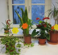 Gärtnern mit Kindern – Der Schulzimmergarten