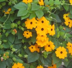 Gartentherapie – Was ist das? Gartentherapie und Gesundheit