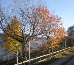 Räucherspaziergang in freier Natur 28.10.2017 – Graun/Kurtatsch