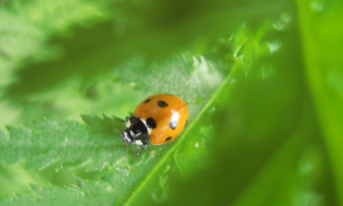 Natürlicher Pflanzenschutz im Garten – 08.07.2017 – Graun/Kurtatsch