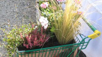 Einkaufswagen bepflanzen
