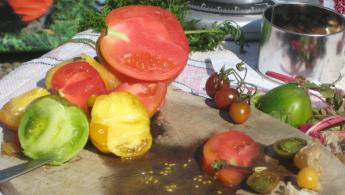 Tomaten verkosten