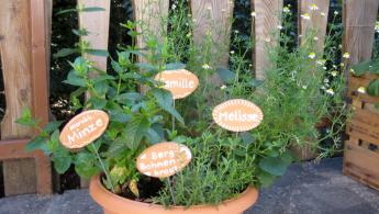Kräuterschale pflanzen