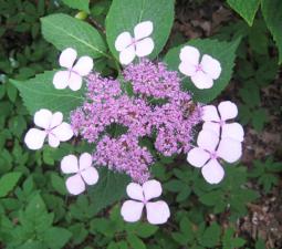 Vorstellung der Diplomarbeit zum Thema Gartentherapie